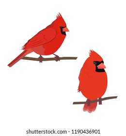 Vector illustration of a cardinal bird on white isolated background. Template for postcards, icons, logo, web design.