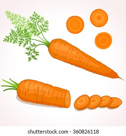 Vector illustration of carrot with tops. Sliced carrots. Pieces of carrots.