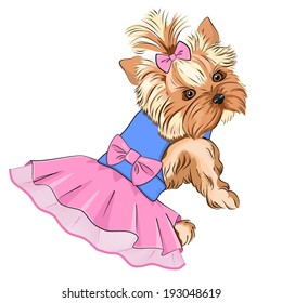 Vector Illustration of cartoon cute fashion dog ( purebred Yorkshire Terrier/ pocket dog) in fluffy dress with lace skirt and big pink bow in her back and little bow in her hair