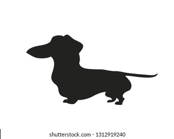 Vector illustration of a cartoon dachshund that stands, silhouette drawing. white background.