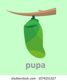 vector illustration cartoon flat design of green pupa cocoon of the butterfly