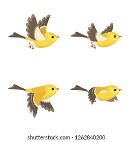 Vector illustration of cartoon flying American Goldfinch (female) sprite sheet isolated on white background. Can be used for GIF animation
