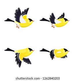 Vector illustration of cartoon flying American Goldfinch (male) sprite sheet isolated on white background. Can be used for GIF animation