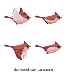 Vector illustration of cartoon flying Cardinal Bird (female) sprite sheet isolated on white background. Can be used for GIF animation