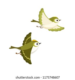 Vector illustration of cartoon flying Goldcrest pair (the smallest European bird) isolated on white background