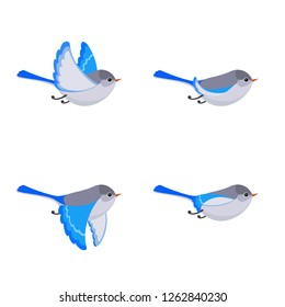 Vector illustration of cartoon flying Splendid Fairy Wren (female) sprite sheet isolated on white background. Can be used for GIF animation