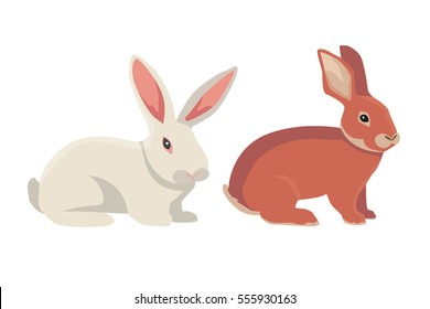 vector illustration of cartoon rabbits different breeds. Fine bunnys for veterinary design