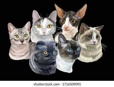 Vector illustration with cats breeds portraits isolated on black background. Cats vector retro horizontal illustration in realistic style. Image for design and cards. Stock illustration