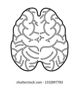 Vector illustration of cerebrum and hemisphere logo. Web element of cerebrum and gyri stock symbol for web.