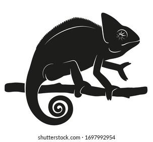 Vector illustration of a chameleon silhouette on a branch. Simple, black, isolated on a white background, detailed. For use as a design element, for infographics.