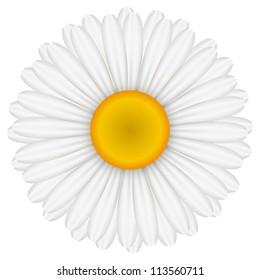 Vector illustration of chamomile