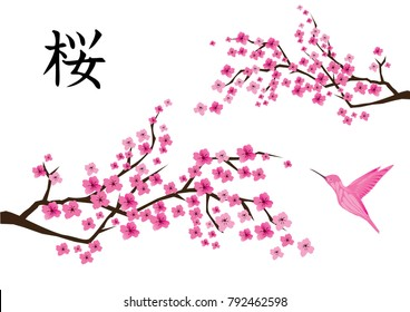 vector illustration of cherry blossom with Japanese text and pink hummingbird.
