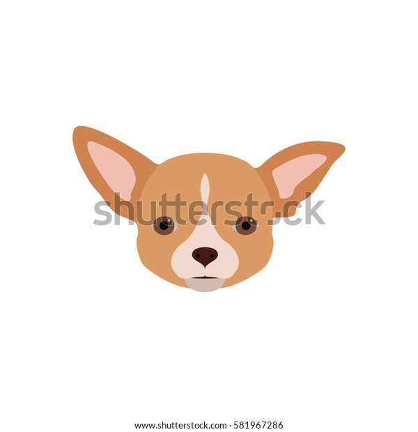 Vector illustration of chihuahua dog in flat style. Dog flat icon.
