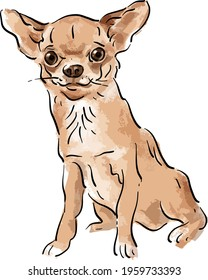 Vector illustration with chihuahua, small dog, short-haired dog