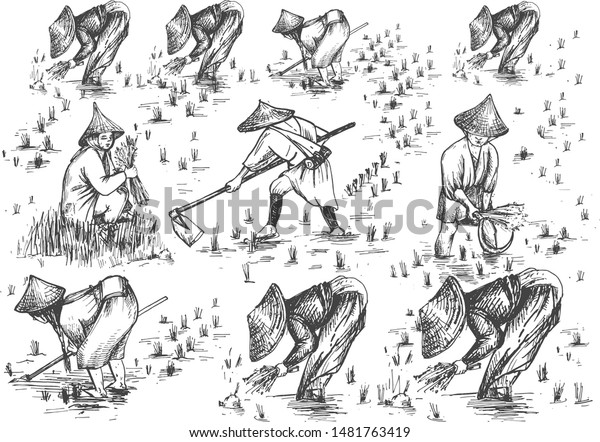 Vector Illustration Chinese Japanese Rice Growing Stock