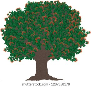 Vector illustration of the Christmas tree of New Zealand with blooming red flowers.