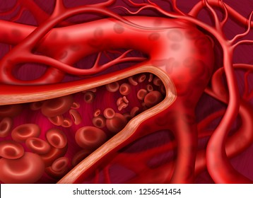 Vector illustration. Circulation of the blood in vein