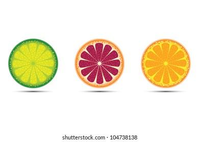 Vector illustration citrus fruits orange, lime and grapefruit on white background.