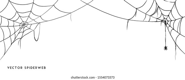 Vector Illustration of a Cobweb on a White Background