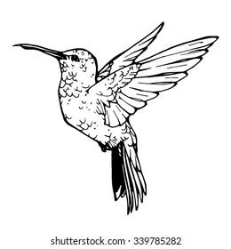 vector illustration of colibri; outline of colibri
