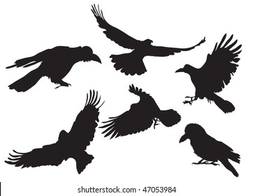 Vector illustration collection of crow silhouette in different flight positions