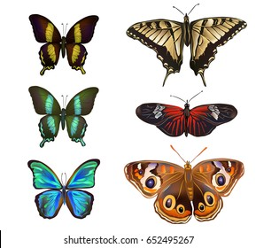 Vector illustration of  Collection of various kinds of butterflies, isolated on white background