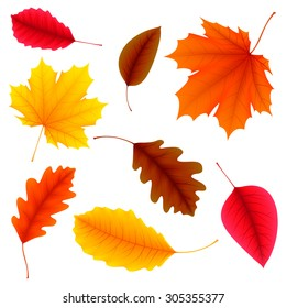 Vector illustration of color autumn leaves on white background