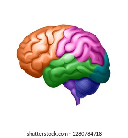 Vector illustration of colored human brain divided into areas side view close up isolated on white background