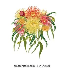 Vector Illustration of Colorful Australian Native Flowers