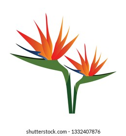 Vector illustration of colorful bird of paradise flowers  on white background.