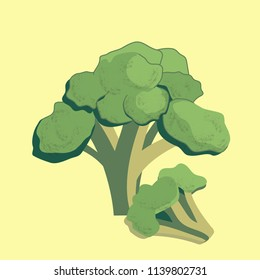 Vector illustration of colorful broccoli. Healthy organic food
