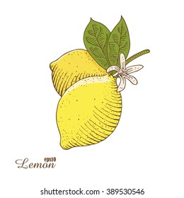Vector illustration of colorful lemon isolated on white background. Hand-drawn a sketch in woodcut style. Contour drawing with hatching.