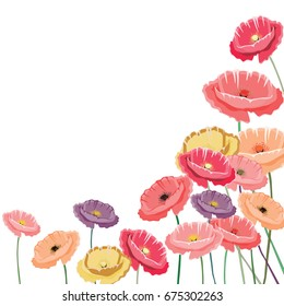 Vector illustration of colorful poppies in a corner. Vector illustration on white background