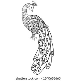 vector illustration coloring book peacock bird, simple doodle drawing