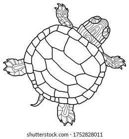 Vector illustration for coloring book. Realistic design pond slider or turtle. Marine inhabitants. Children's illustration. Pet turtle red-eared slider