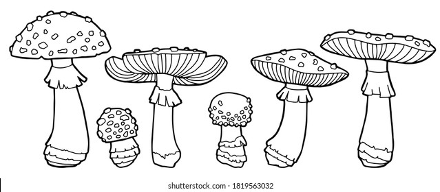 Coloring Pages Mushrooms High Res Stock Images Shutterstock
