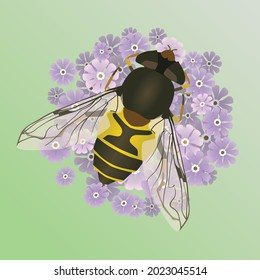 A vector illustration of a common drone fly or an eristalis tenax on a purple flower. The background is a soft green gradient