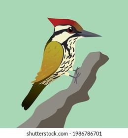 A vector illustration of a common flameback woodpecker or  common goldenback on a tree trunk with a green background