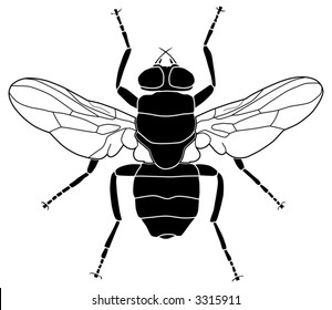Vector illustration of a common fly
