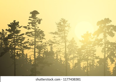 Vector illustration of coniferous forest with pines and spruces, under morning yellow and orange sky with rising sun and sunshine