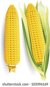 Vector illustration - Corn ear isolated on white
