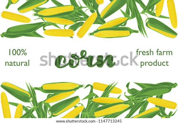 vector illustration of corn and leaf design with lettering corn background white and vegetable and text fresh farm product 100% natural EPS10
