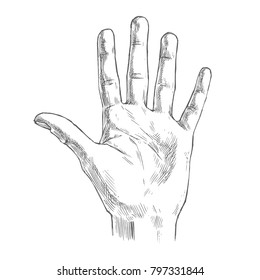 Vector illustration of counting hand isolated on white background. Open palm showing number five in sketch style.