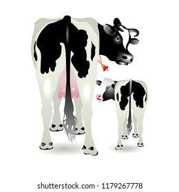 Vector Illustration. Cow and calf isolation on white.