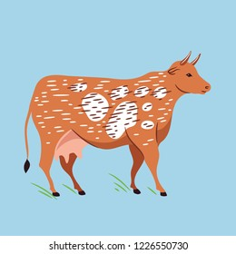 Vector illustration of cow. Dairy cattle.