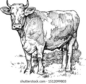 Vector illustration of a cow in the meadow