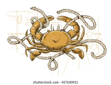 Vector illustration of crab, map and rope. Sea collection