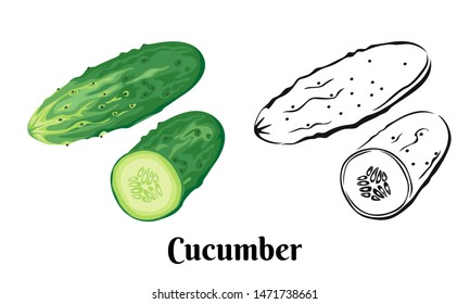 Vector illustration of cucumber Isolated on white background. Black and white sketch icon and color image of green cucumber in cartoon simple flat style. Whole vegetable and half.