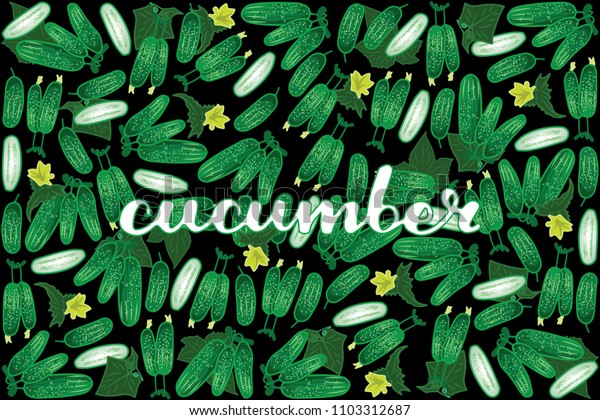 vector illustration of cucumber and leaf design with lettering cucumber background black and vegetable EPS10