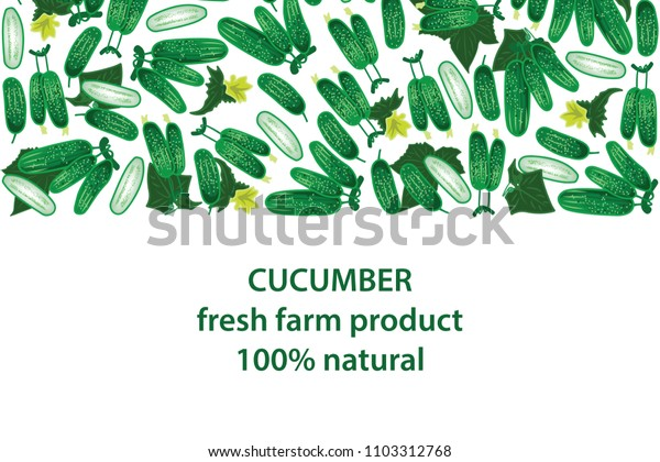 vector illustration of cucumber and leaf design background white and vegetable and text fresh farm product 100% natural EPS10